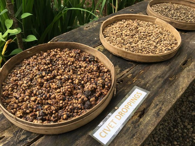 Bali Kopi Coffee Luwak Bean Food Cultures Balinese Food Civet Cat Dropping Fresh Bestoftheday