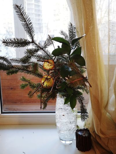 Advent mood interior🌲🌿🍊 Firtree Communication Interior Design EyeEm Selects Fresh Stillife EyeEm Best Shots EyeEm Gallery Water Window Home Interior Close-up Plant Window Sill Vase Houseplant