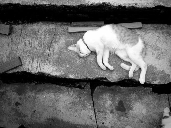 Cat Black & White Black And White Photography Just A Moment Little Girl Love ♥ Time Life Is Simple Monday Morning Hello Bangkok Sleepy Morning Too Early On The Way