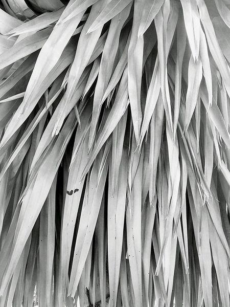 Leaf Leaves Leaf Photography Leaves Photography Leaf Collection Leaves Collection Pattern Pattern Leaf Pattern Leaves Nature Abstract Nature Photography Close Up Close Up Photography Close Up Leaf Close Up Leaves Black And White Black And White Photography Black And White Leaves Black And White Leaf
