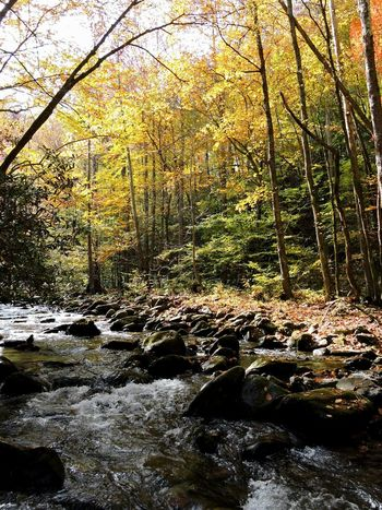 Looking through the Fall pictures today. This was taken on October 2014 in Great Smoky Mountains National Park . Smoky Mountains Stream Fall Autumn Leaves Fall Colors Fall Leaves Foliage Water Woodland Stream Creek Hiking Outdoors Seasonal Fall Season Tennessee Smokies United States
