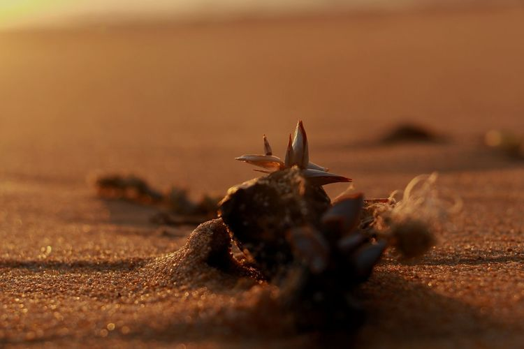 Close-up of insect on sand