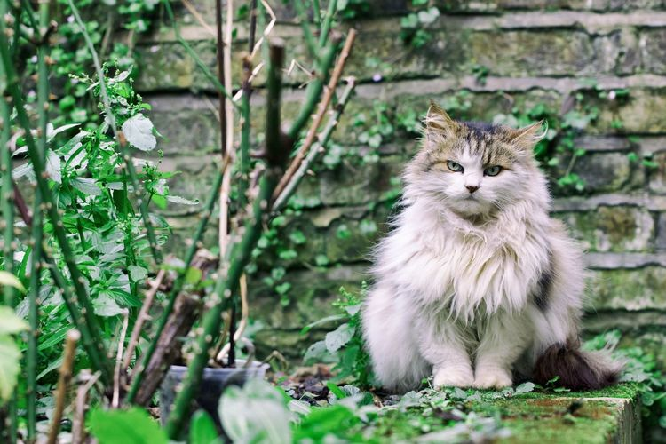 Portrait of cat relaxing by plants against stone wall