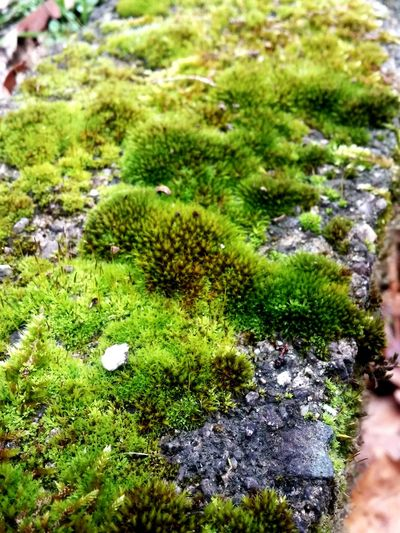 Green Color Growth Day Moss Outdoors Beauty In Nature