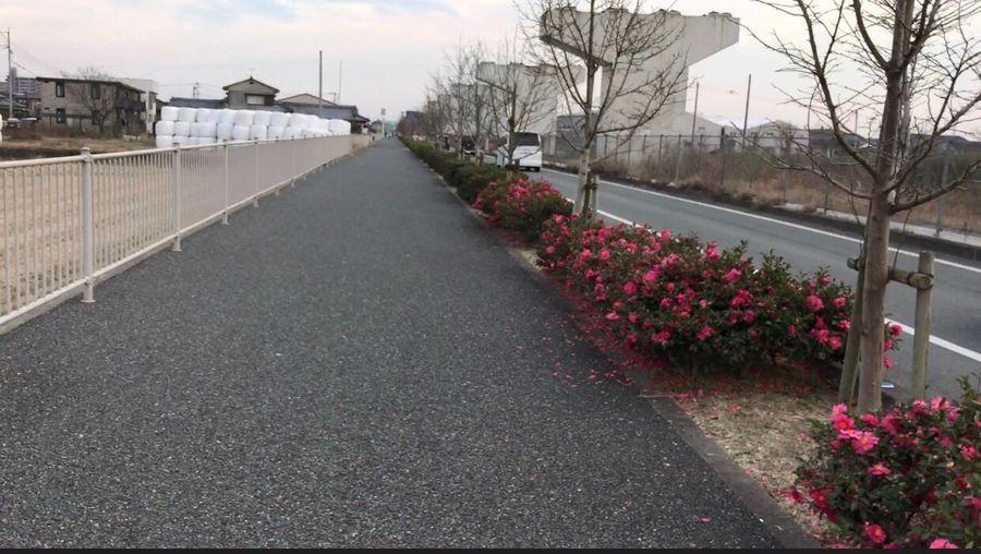 ウォーキングコース Road City Flower Sky Outdoors The Way Forward No People Nature Beauty In Nature Day Behappy Japan Iphone7 福岡県 今晩は ウォーキング ランニング 12月 お疲れ様 冬 枯葉 晴れ 風
