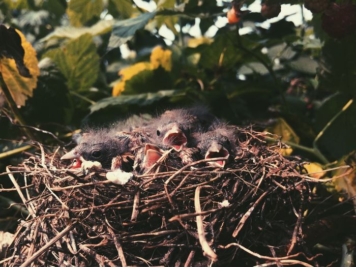 Close-Up Of Hatchlings In Nest