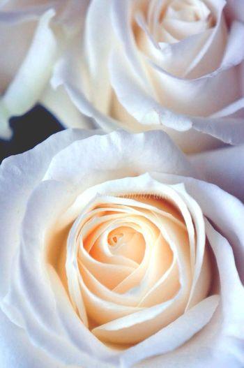 最近、ぜんぜん写真撮れてない(●´ω`●)Macro_collection Macro_flower Macroclique Macroporn