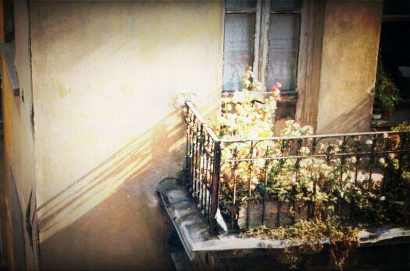 Traveling Flowers Building Observing The World Plants Strange Objects In My Neighborhood Balcony At Turkey Melancholy Türkiye