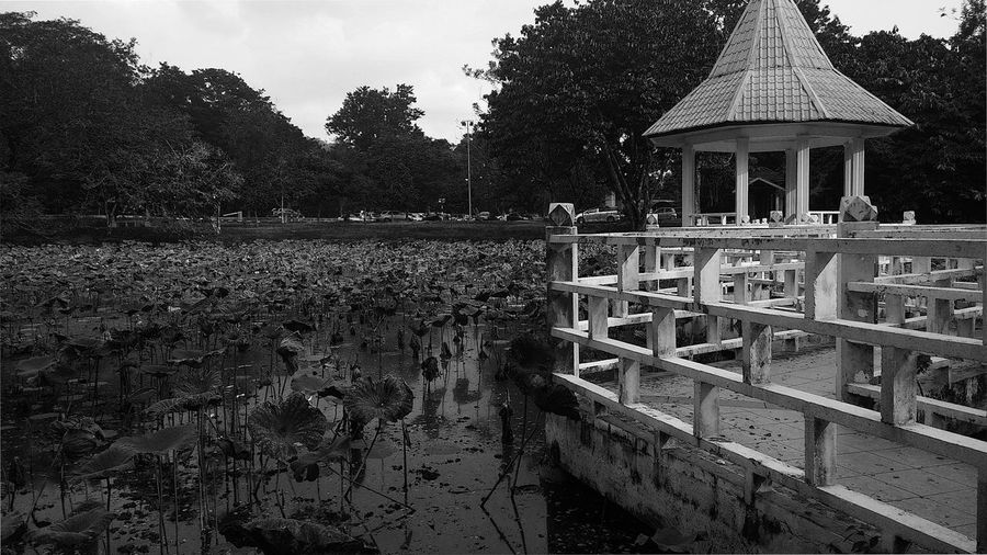 Public Space Public Park Taiping Lake Gardens Waterlilies Architecture Built Structure Day Gazebo Growth Lake Outdoors Plant Recreational Park Sky Tranquil Scene Tranquility Water