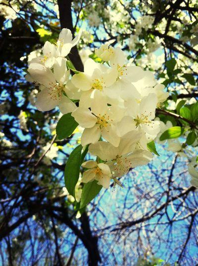 Flower Porn Nature Spring