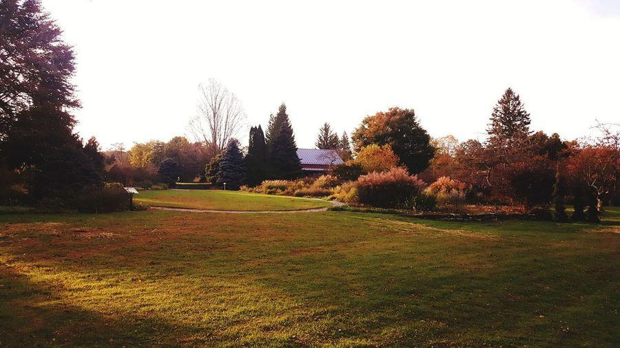 Autumn Autumn colors Autmn Landscape Autmnsunshine Autmn Colors Tree Clear Sky Sunlight Sky Grass Green Color Countryside Tranquil Scene Calm Tranquility Field Scenics Landscape Idyllic