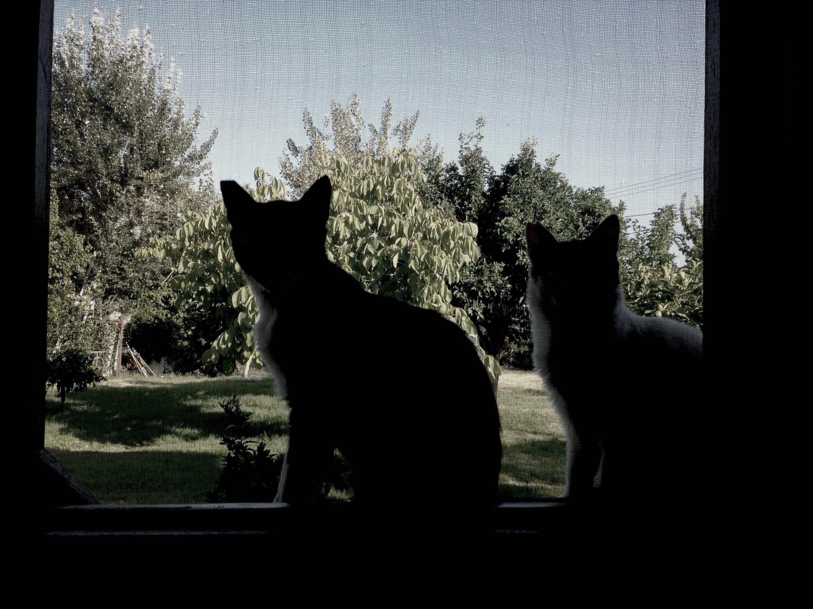 pets, domestic animals, animal themes, mammal, domestic cat, one animal, cat, feline, window, sitting, black color, looking through window, indoors, glass - material, relaxation, window sill, whisker, animal, silhouette, zoology