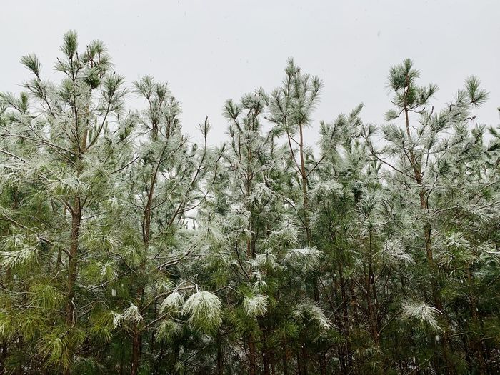 Trees growing on field during winter
