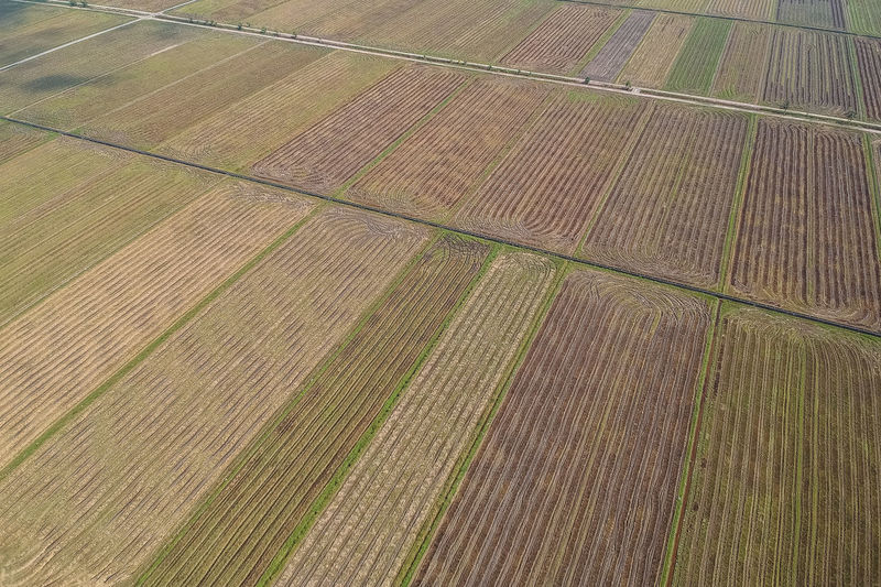 Pattern Agriculture Rural Scene Field Landscape Full Frame Farm No People Growth Day High Angle View Plant Land Tranquil Scene Backgrounds Environment Nature Tranquility Aerial View Outdoors Parallel