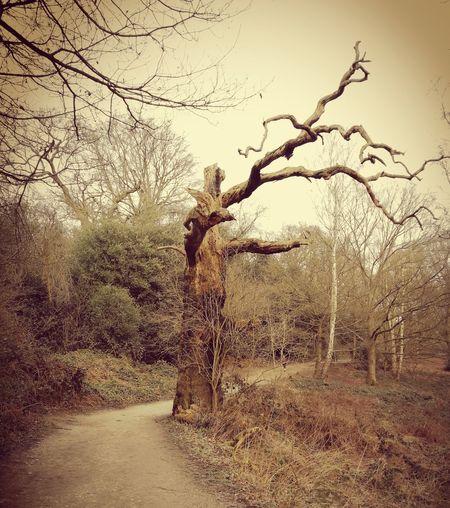 Spooky Tree,
