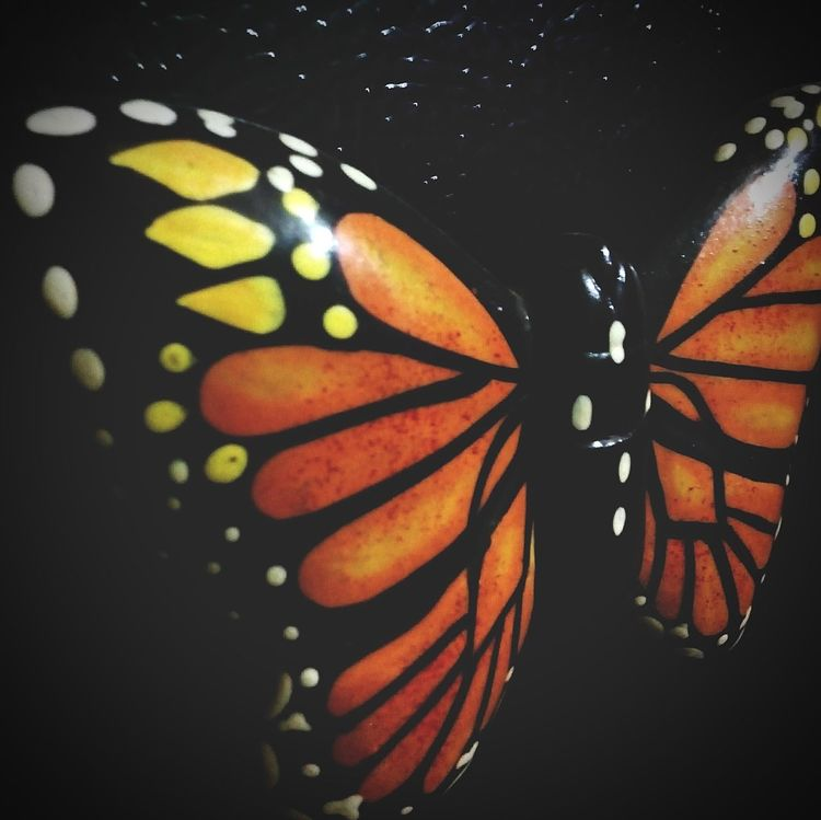 Butterfly Wooden Texture Orange Color Love Beautiful Animals