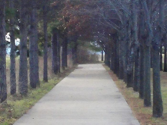 4statepics Absence Arkansas Blindshot Composition Day Diminishing Perspective Empty Footpath Forest Leading Narrow Outdoors Park Perspective Perspective Road Shadow Speed Street The Way Forward Tree Tree Trunk Vanishing Point