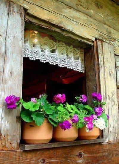 Colours Natural Beauty Nature_collection Window Flowers EyeEm Best Shots The Natural World Spring