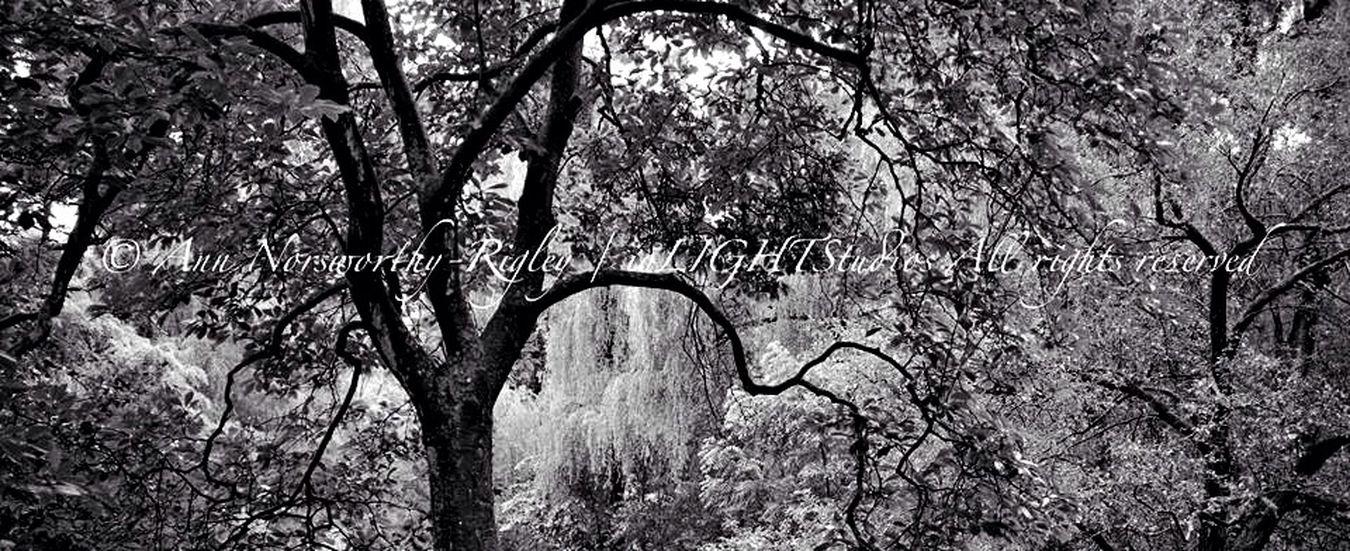 "©Ann Norsworthy ""m a g n o l i a p a r k"" Black & White EyeEm Nature Lover EyeEm Best Shots - Landscape IoLIGHTstudios"