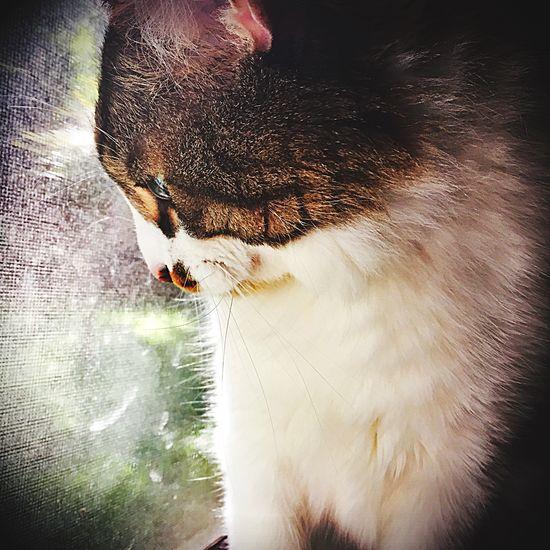 Hello World Lovemycat Pets Cats Hi! Animals Cute Cats Cute Pets Cat Nature