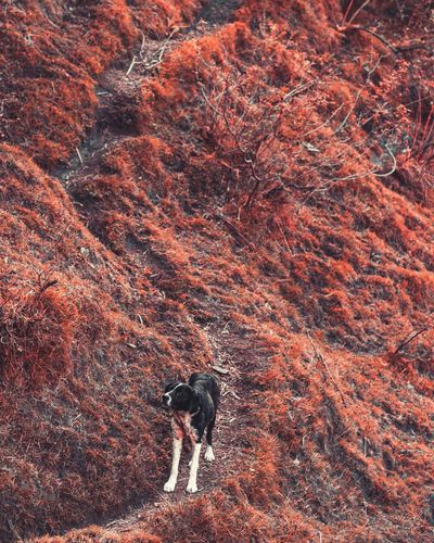 High angle view of dog on landscape