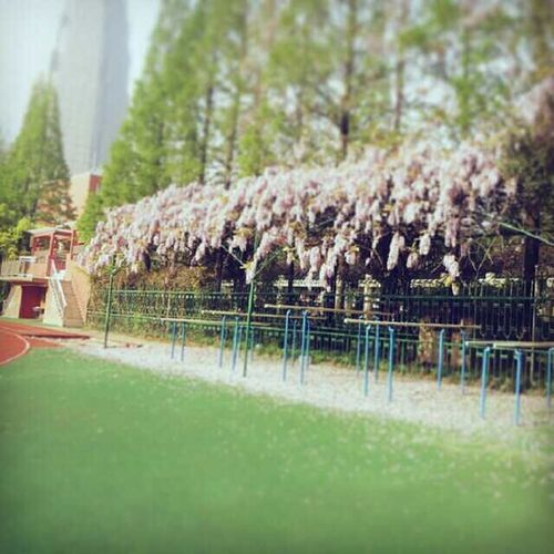 My senior high school&My love