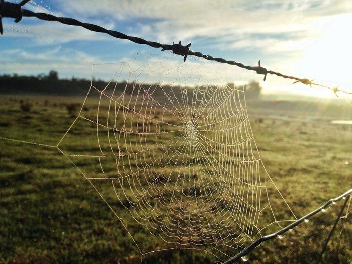 My lovely secret paradise … Spiderweb