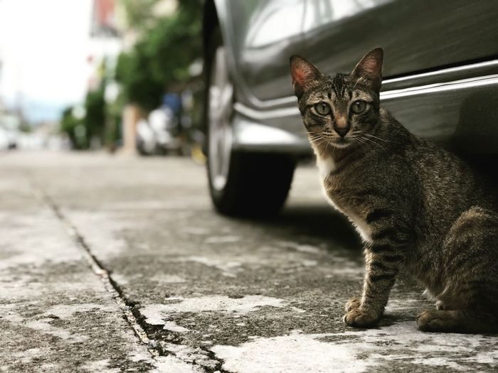 Cat❤️😻 One Animal Mammal Cat Pets Feline Domestic Cat Domestic Animals Domestic Portrait Vertebrate Focus On Foreground Looking At Camera City No People Day Looking Whisker Tabby #urbanana: The Urban Playground