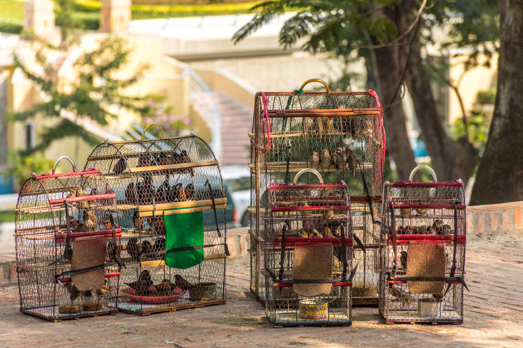 Birds in cages for sale