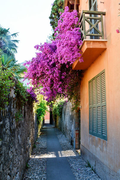 Purple heaven on a little street - Bonassola, Liguria, Italy. Architecture Bonassola Building Exterior Built Structure City Day Flower Italia Italy La Spezia Liguria Nature No People Outdoors Plant Purple Tree Urban