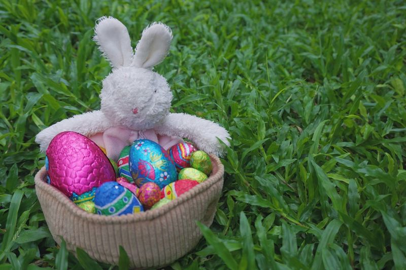 Fluffy bunny in basket with chocolate Easter eggs Easter Easter Egg Easter Bunny Animal Representation Celebration Cultures Tradition Multi Colored Holiday - Event Springtime Grass Stuffed Toy Green Color Easter Egg Hunt Outdoors Nature