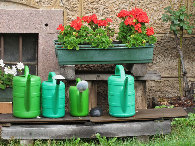 Range of plastic watering cans ready for work and pots of geraniums Blossom Can Container Equipment Flower Flower Pot Front Or Back Yard Gardening Gardening Equipment Geranium Grass Green Irrigation Equipment Man Made No People Plant Plastic Potted Plant Spraying Stone Wall Water Watering Watering Can Work Tool