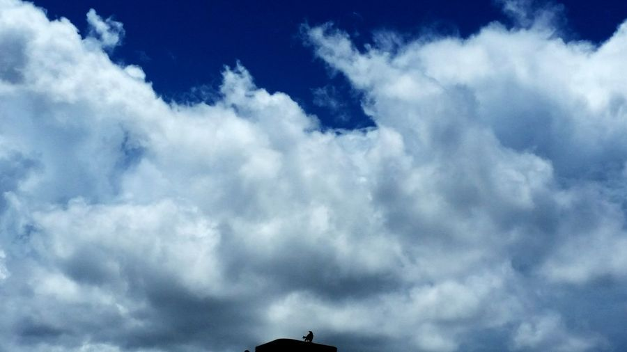 Bird Alone Storms Clouds Behind Beauty In Nature Outdoors Scenes