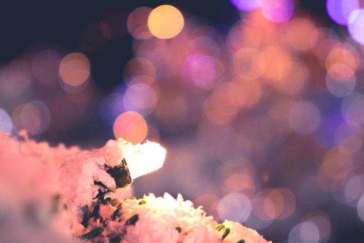 Defocused image of illuminated flowering plants at night