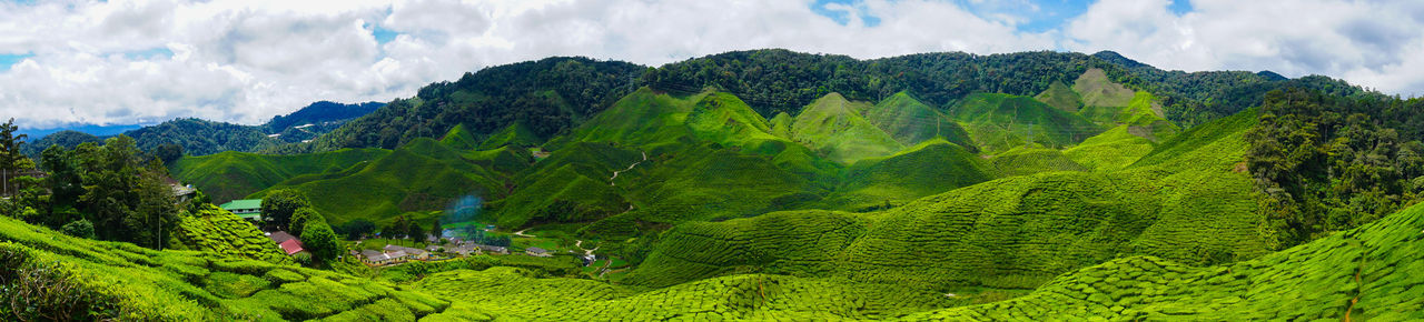 Panorama view,Sungai Palas tea plantation in Cameron Highlands, Pahang, Malaysia India Panorama Shot. Agriculture Beauty In Nature Ceylon Cloud - Sky Day Forest Green Color Idyllic Scenery Landscape Lush Foliage Mountain Mountain Range Nature No People Outdoors Panorama View Rural Scene Scenics Sky Tea Crop Travel Destinations Tree Tropical Climate