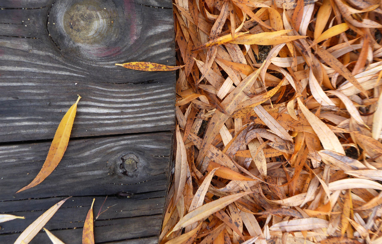 wood - material, no people, leaf, directly above, day, outdoors, close-up