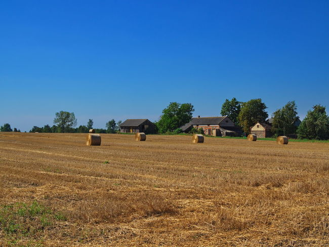 Village farming field landscape after harvesting wheat plants Field Landscape Land Sky Agriculture Plant Rural Scene Environment Clear Sky Farm Scenics - Nature Tranquil Scene Hay Tree Nature Beauty In Nature Tranquility Bale  Grass Blue No People Outdoors Wheat Field Agriculture Land Food Industry