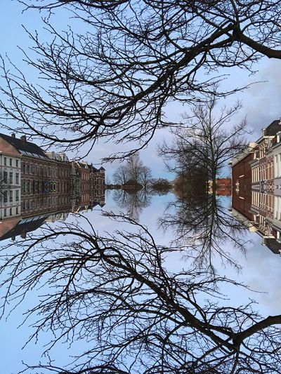 Infinity Infinity ∞ Treetastic Branches Trees Symmetry Reflection