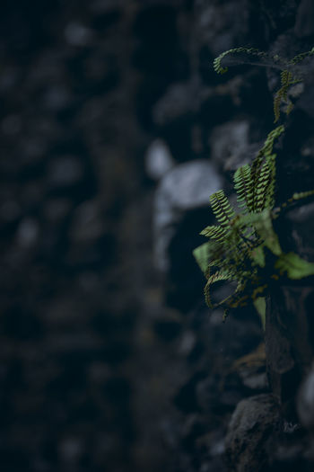 Plant Growth Nature No People Leaf Close-up Day Plant Part Tree Selective Focus Focus On Foreground Green Color Beauty In Nature Outdoors Rock Rock - Object Tranquility Textured  Solid Land Leaves