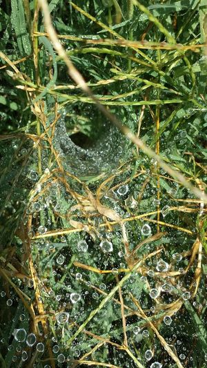Wet Web This Week On Eyeem EyeEm Best Shots - Nature Oklahoma Boots N Jeans Gal💝 Nature On Your Doorstep Country Life Collected Community Eeyem Photography