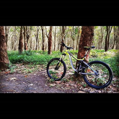 Mejeng dulu... Giant MTB Gowes Bike Giantbike Reign2 Reign2013