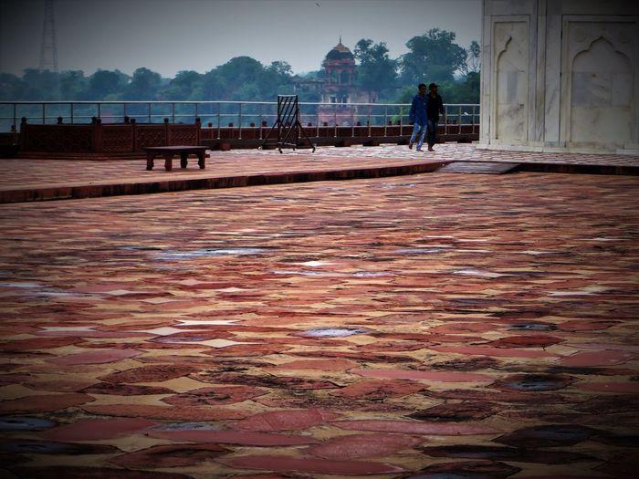 Taj Mahal Adult