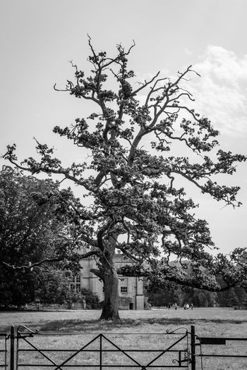 Cherry tree by plants against sky