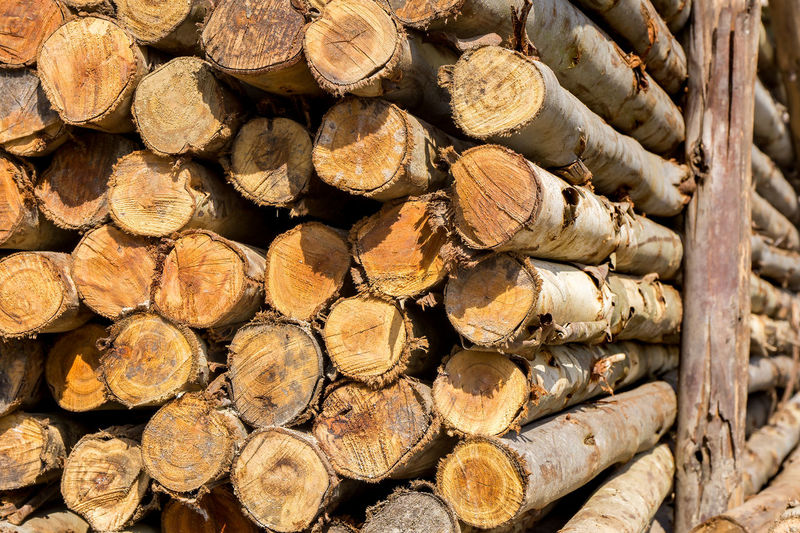 Abundance Backgrounds Close-up Day Deforestation Firewood Forestry Industry Fuel And Power Generation Full Frame Heap Large Group Of Objects Log Lumber Industry No People Outdoors Pile Stack Textured  Timber Tree Ring Wood - Material Woodpile