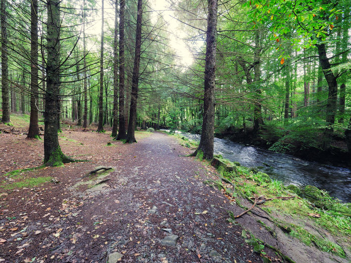 Northern Ireland Tollymore Forest Park Beauty In Nature Day Forest Growth Landscape Nature No People Outdoors Scenics Sky Tranquil Scene Tranquility Tree Tree Trunk WoodLand