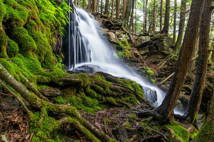 A secluded water fall hidden in the forest. Forest Green Green Color Light And Shadow Moss Overgrown Roots Tree Trees Waterfall Woods
