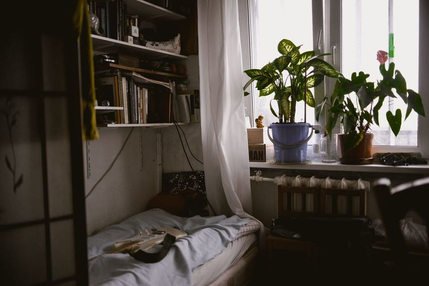 Life is good EyeEmNewHere Potted Plant Plant Home Interior Indoors  Nature No People Flower Day Freshness