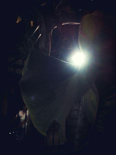 Outside My House Night Photography Lightbulb Leaf 🍂 !! 😰 took soome pretty good time!!