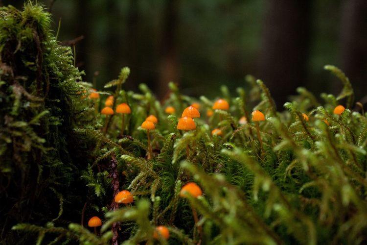 Oregon Nature