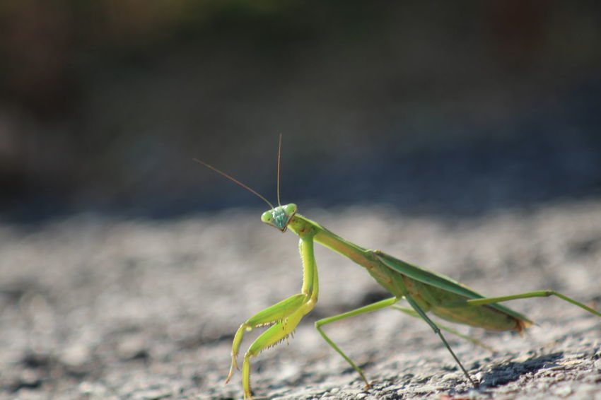 Animal Themes Animal Wildlife Animals In The Wild Close-up Insect Nature No People One Animal Outdoors
